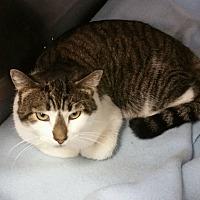 Adopt A Pet :: Sleepy Hollow - Pompton Plains, NJ
