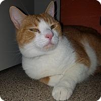 Adopt A Pet :: Moe` - Sarasota, FL