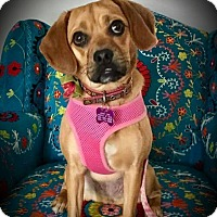Adopt A Pet :: Peanut ~ Adoption Pending - Youngstown, OH