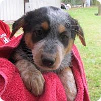 Adopt A Pet :: Harmony - Wharton, TX