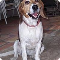 Adopt A Pet :: Lady Sally - Phoenix, AZ