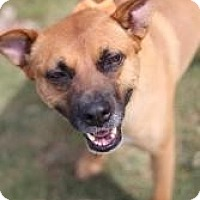 Adopt A Pet :: Mynx - Justin, TX