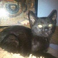 Adopt A Pet :: Trixie - San Bernardino, CA