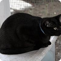 Adopt A Pet :: Andy - Sylvania, GA