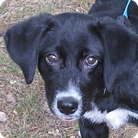 Adopt A Pet :: Palmer - Hagerstown, MD
