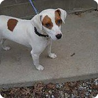 Adopt A Pet :: Sara - Rexford, NY