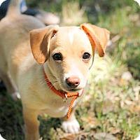 Adopt A Pet :: Micah - Austin, TX