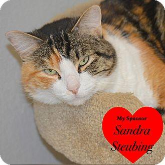 Calico Cat for adoption in San Leon, Texas - June Bug