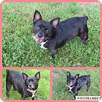 Adopt A Pet :: Prissy - Longview, TX