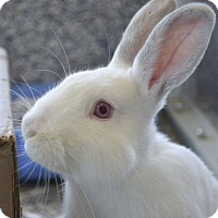 Adopt A Pet :: Stormy - Fairport, NY