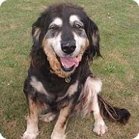 Adopt A Pet :: Quasar - Madison, WI