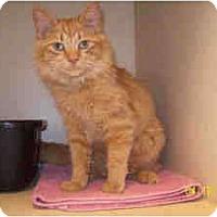 Adopt A Pet :: Gilly - Arlington, VA