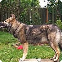 Adopt A Pet :: Aya - Ashland, OR