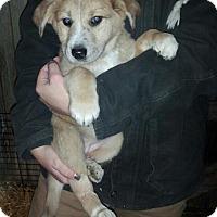 Adopt A Pet :: Aspin & Ivy - Denver, IN