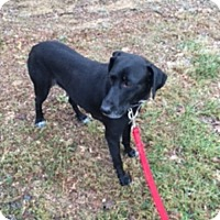 Adopt A Pet :: Sweetie - Lewisville, IN