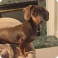 Adopt A Pet :: Puddin - Irmo, SC