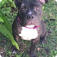 Adopt A Pet :: Mindi - Boca Raton, FL