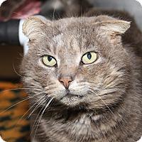 Adopt A Pet :: Greystoke (ComboTest/Neuter) - Marietta, OH