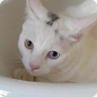 Adopt A Pet :: Angelo - New  York City, NY