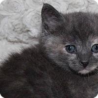 Adopt A Pet :: Abagail - Thousand Oaks, CA