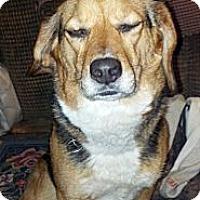 Adopt A Pet :: Maggie - Chewelah, WA