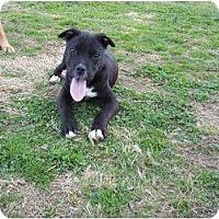 Adopt A Pet :: Teddy - Adamsville, TN