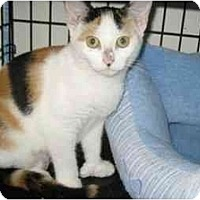 Adopt A Pet :: Jorie - Colmar, PA