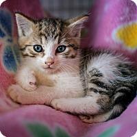 Adopt A Pet :: Zippy - Shelton, WA