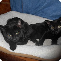 Adopt A Pet :: Fonzie and Potsy - Richland, MI