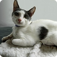 Adopt A Pet :: Floriza - The Colony, TX