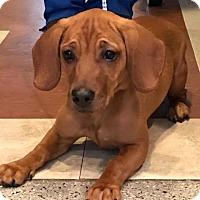 Adopt A Pet :: Jade - Sayville, NY