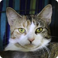 Adopt A Pet :: Prim - Sarasota, FL