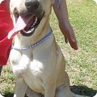 Adopt A Pet :: Gonzales - Ridgeland, SC