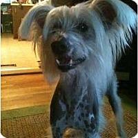 Adopt A Pet :: Sparky - Gilford, NH