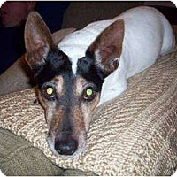 Adopt A Pet :: Gibbs in Needville - Houston, TX