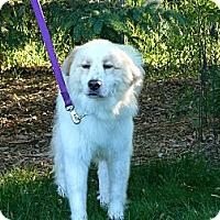 Adopt A Pet :: Thor - Minneapolis, MN
