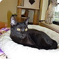 Adopt A Pet :: Carlton - Lake Charles, LA