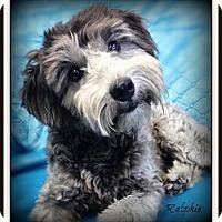 Adopt A Pet :: Ralphie - Pascagoula, MS