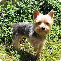 Adopt A Pet :: Angel - Baton Rouge, LA