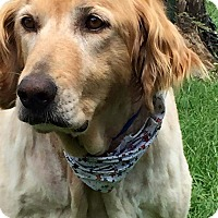 Adopt A Pet :: Gabby - Knoxville, TN