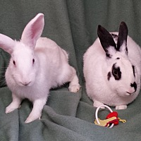 Adopt A Pet :: Promise and Martin - Williston, FL