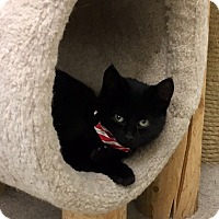 Adopt A Pet :: Coal - Warren, OH