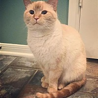 Adopt A Pet :: Casanova - The Woodlands, TX