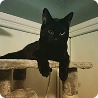 Adopt A Pet :: Pantherlily - Columbus, OH