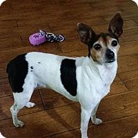 Adopt A Pet :: Tinkerbell in Texas - Austin, TX