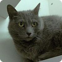 Adopt A Pet :: Charlize Theron - Richboro, PA