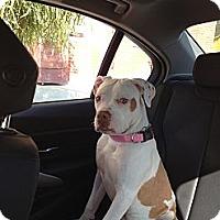 Adopt A Pet :: Emily - Santa Monica, CA