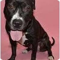 Adopt A Pet :: MAZZI - Minnetonka, MN