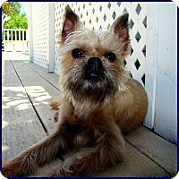 Adopt A Pet :: LEVI - ADOPTION PENDING - Seymour, MO