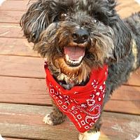 Adopt A Pet :: Gabe - Ashland City, TN